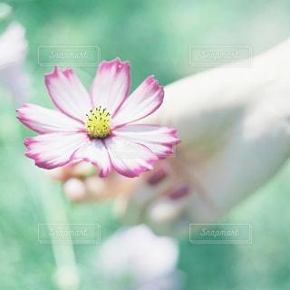 花の写真・画像素材[5608]