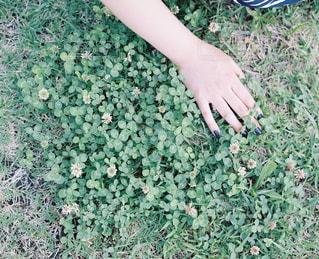 花の写真・画像素材[5593]