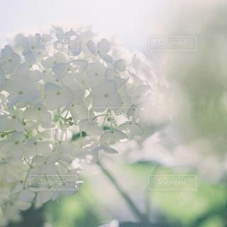 花の写真・画像素材[5580]