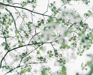 風景の写真・画像素材[5570]