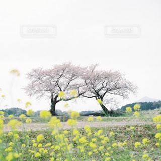 風景の写真・画像素材[5569]