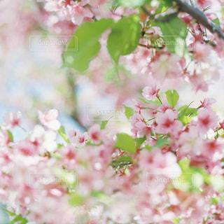 花の写真・画像素材[5548]
