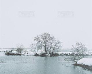 自然の写真・画像素材[5525]