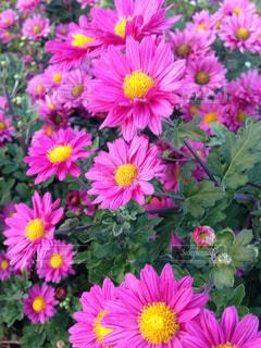 花の写真・画像素材[274871]