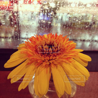 花の写真・画像素材[263403]