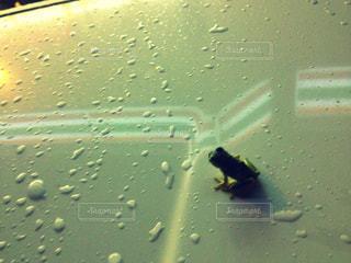 雨の写真・画像素材[264862]