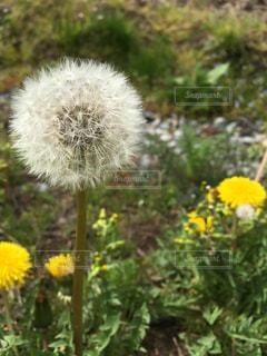 花の写真・画像素材[422975]