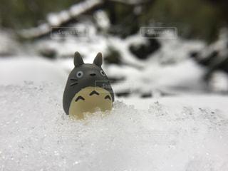 雪の写真・画像素材[569135]