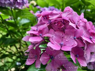 花の写真・画像素材[661388]