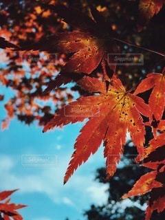 自然の写真・画像素材[5482]