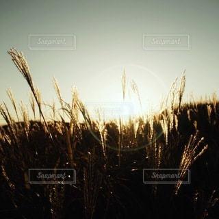 自然の写真・画像素材[5462]