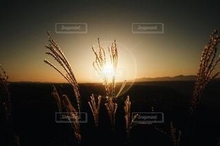 自然の写真・画像素材[5460]