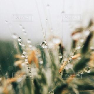 自然の写真・画像素材[5436]