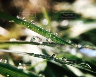 風景の写真・画像素材[5435]