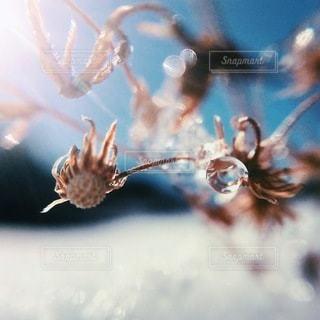 花の写真・画像素材[5434]