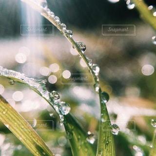 水滴の写真・画像素材[5433]