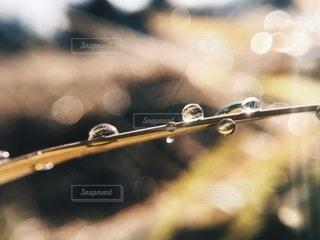 水滴の写真・画像素材[5432]