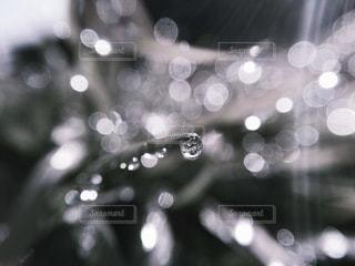 水滴の写真・画像素材[5431]