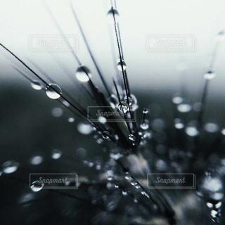 水滴の写真・画像素材[5428]