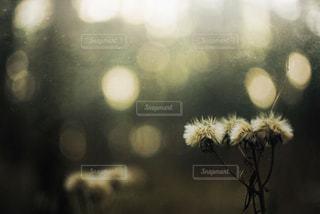 花の写真・画像素材[5424]