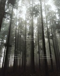 自然の写真・画像素材[5422]