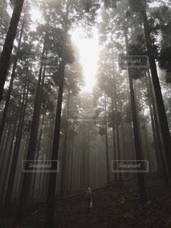 自然の写真・画像素材[5421]