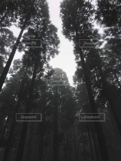 自然の写真・画像素材[5419]