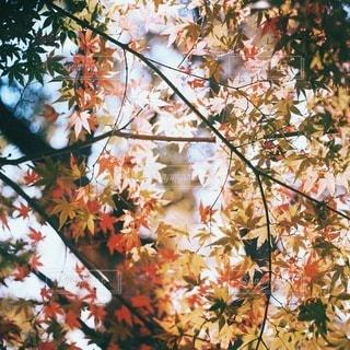 自然の写真・画像素材[5414]