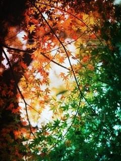 自然の写真・画像素材[5413]