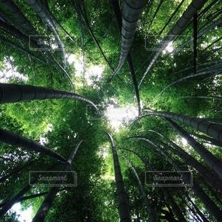 自然の写真・画像素材[5409]