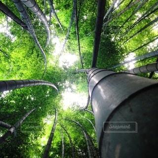 自然の写真・画像素材[5408]