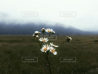 自然の写真・画像素材[5407]