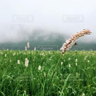 自然の写真・画像素材[5404]