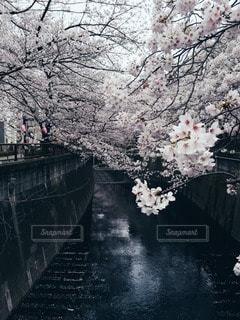 自然の写真・画像素材[10765]
