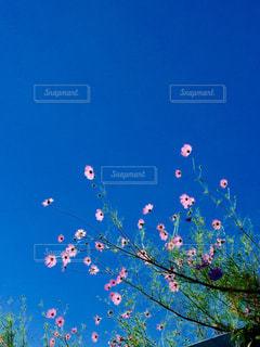 自然の写真・画像素材[263794]
