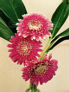 花の写真・画像素材[263818]