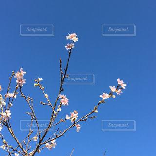 花の写真・画像素材[287013]