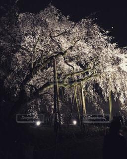 No.673531 桜