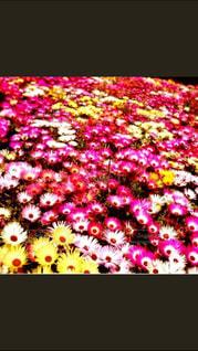 花畑の写真・画像素材[152186]