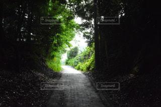 風景 - No.264101