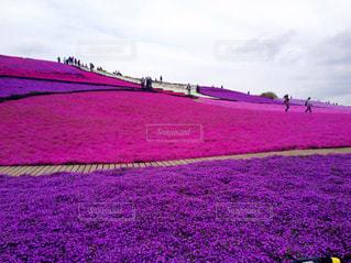 芝桜の丘 - No.266760