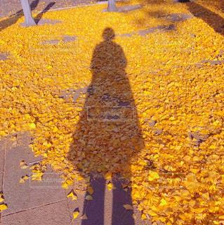 黄色のじゅうたん - No.970367