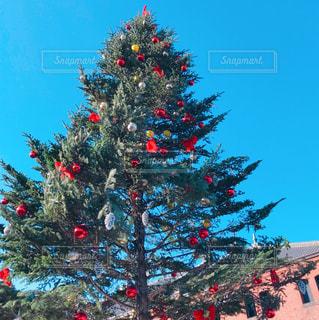 クリスマスツリーの写真・画像素材[970385]