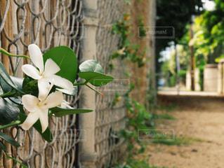 自然の写真・画像素材[459812]