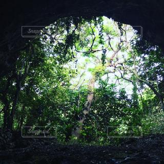 自然 - No.264220
