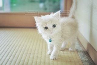 猫の写真・画像素材[5390]