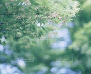 風景 - No.5365