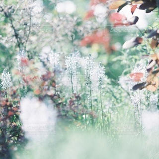 自然の写真・画像素材[5363]