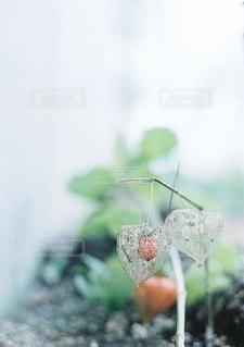 自然の写真・画像素材[5350]