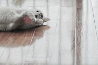 猫の写真・画像素材[5349]